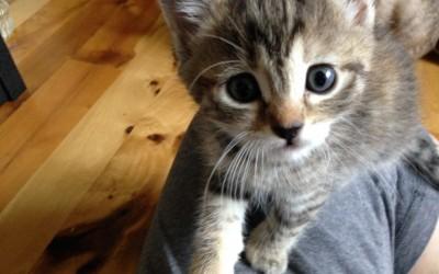 Fostering kittens provides awareness